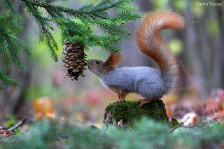 В лесу под ёлкой